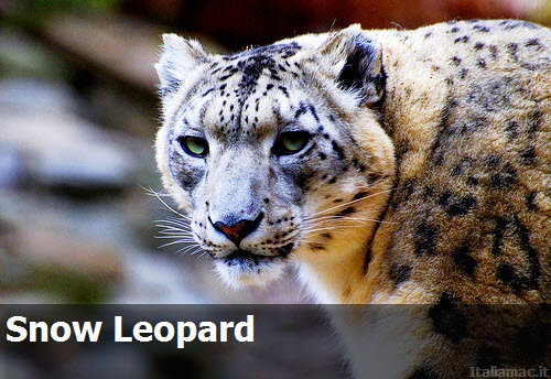 SnowLeopard 0011 Apple: Rilasciata la nuova build 10F566 di Mac OS X 10.6.4 (Snow Leopard)