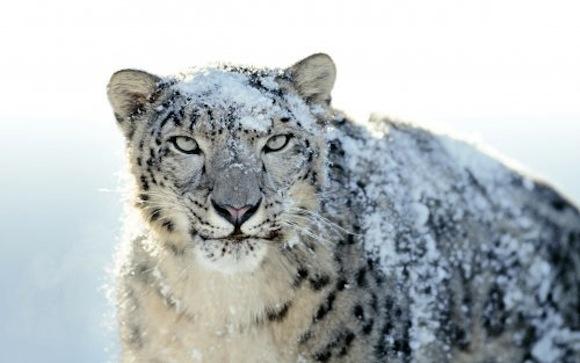 snow leopard 500 Apple aggiorna Mac OS X, si arriva alla 10.6.8
